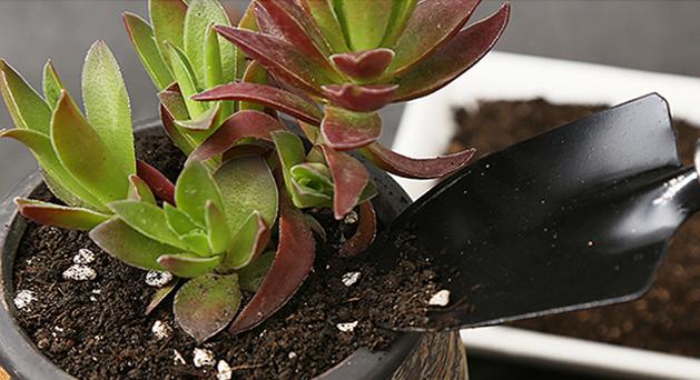 有机营养土能不能直接种花